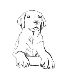 sketching dog portrait pet hand drawn vector image