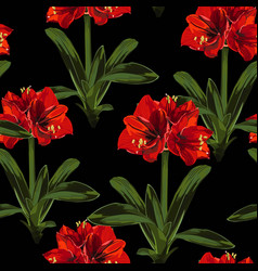 tropical red lily flowers with leaves vector image