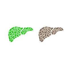 liver silhouette with leaves vector image vector image