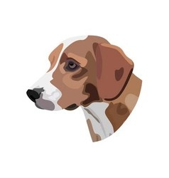 dogs head on white background vector image
