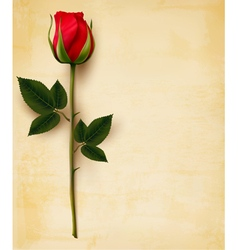 Happy Valentines Day background Single red rose on vector