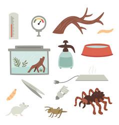 Set a tarantula care items vector