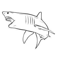 Shark white angry graphics art vector