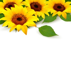 Sunflowers Background With Sunflower And Leaves vector image