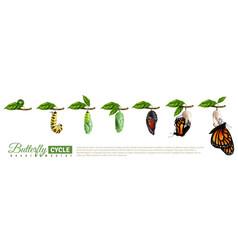 Butterfly metamorphosis horizontal set vector