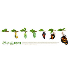 butterfly metamorphosis horizontal set vector image