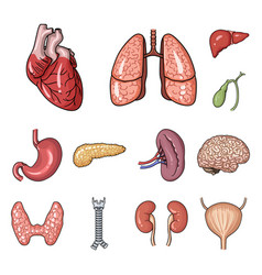human organs cartoon icons in set collection for vector image