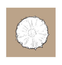 Unpeeled round pineapple slice top view sketch vector