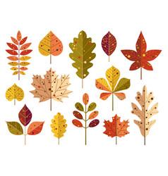 cartoon autumn tree leaves and fall foliage vector image