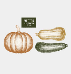 pumpkin and zucchini hand drawn vegetable vector image