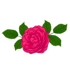 stylish red rose isolated on white vector image