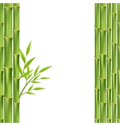 bamboo frame isolated vector image