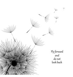 flying dandelion black abstract dandelion vector image