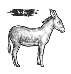 Hand drawn donkey or mule sketching vector
