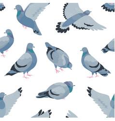 pigeons flat seamless pattern cartoon grey vector image
