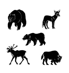 Wild animalshand drawn vector