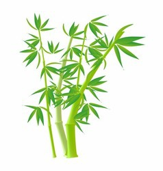 Bamboo Stock Photo Images clipart vector image
