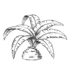 low bottle palm tropical tree monochrome vector image