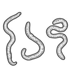 Set three earthworm sketch scratch board vector