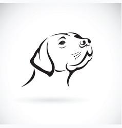 dog head labrador retriever on white background vector image vector image
