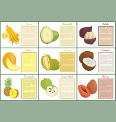 Citron and salak fruits set vector