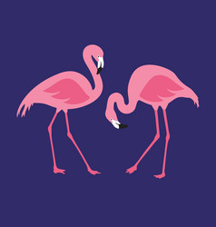 Isolated pink flamingos pair hand drawn vector