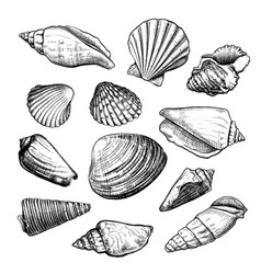 Seashells sketch set vector