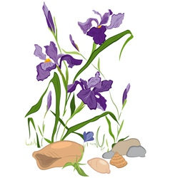 Hand drawn Iris blooms vector image