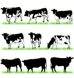 cows bulls vector image