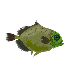 Sea green fish isolated on white oceanic fish vector