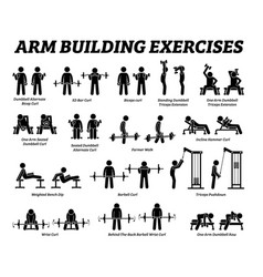 arm building exercises and muscle building stick vector image