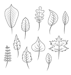 Outlined black and white leaves in flat style set vector