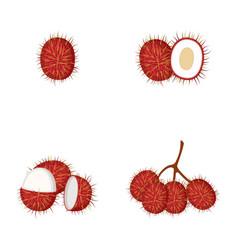 Rambutan whole fruit half vector