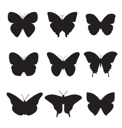 Black butterflies on white background vector image vector image