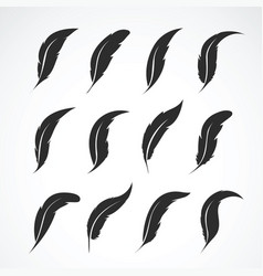 group of feather on white background icon vector image vector image