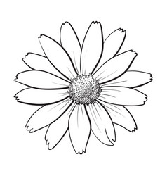 Open heliopsis blossom top view sketch style vector