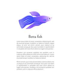 Betta fish siamese fighting fish graphic icon vector