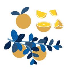 fruit set orange slices vitamins proper vector image