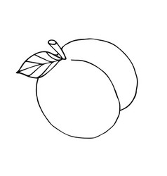 hand drawn sketch doodle outline peach vector image