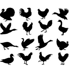 poultry silhouettes collection vector image