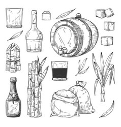 rum production set isolated cane or sugarcane vector image