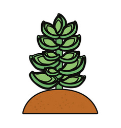 succulent plant icon vector image vector image