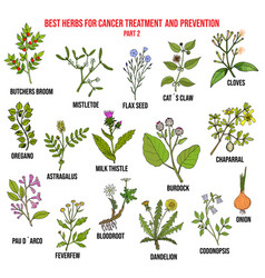 best herbs for cancer treatment part 2 vector image