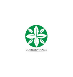 mint leaf logo and symbol vector image