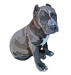 Puppy of pitbull vector