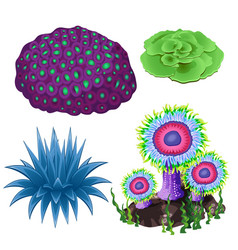 Set of colorful corals and polyps isolated vector