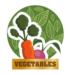 Vegetables fresh natural food health card vector