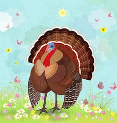 lovely turkey in sunny day vector image vector image