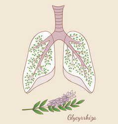 hand drawn of lungs and glycyr vector image vector image