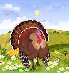 beautiful turkey in rural scenery vector image